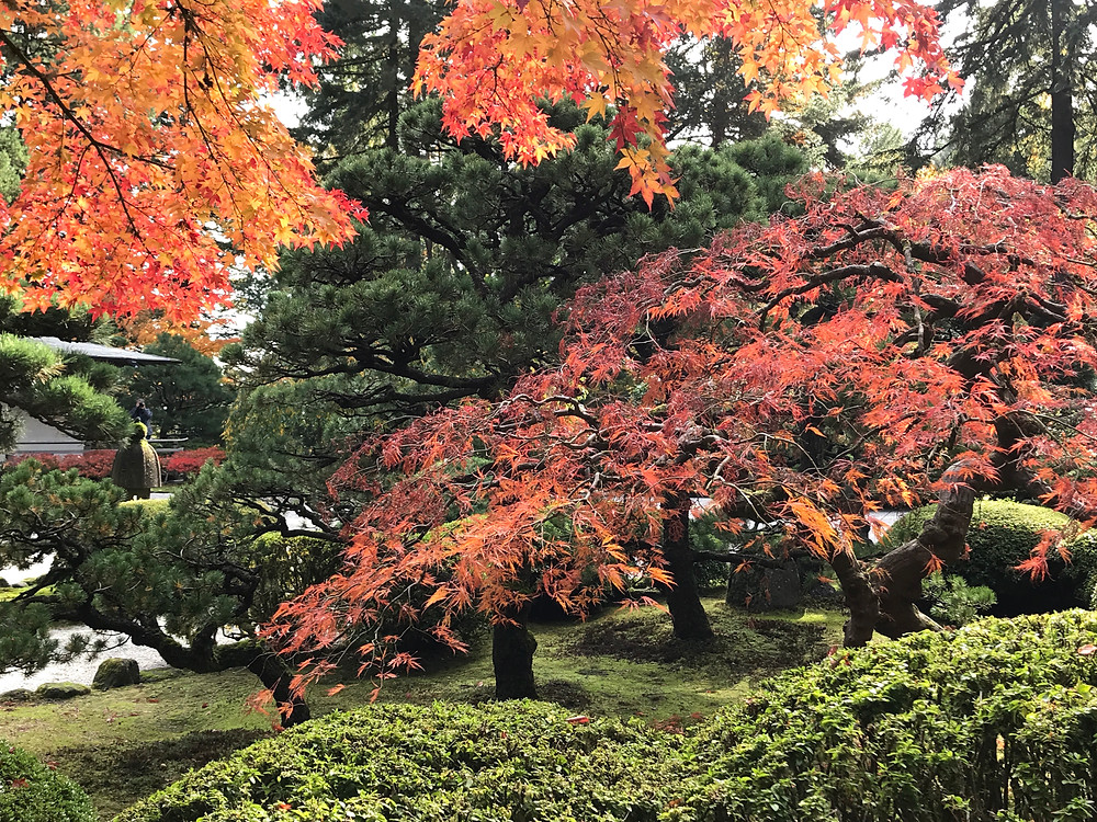 Fall at the Portland Japanese Garden