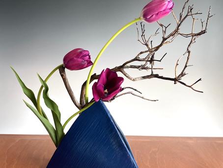 Featured Plant: Tulip