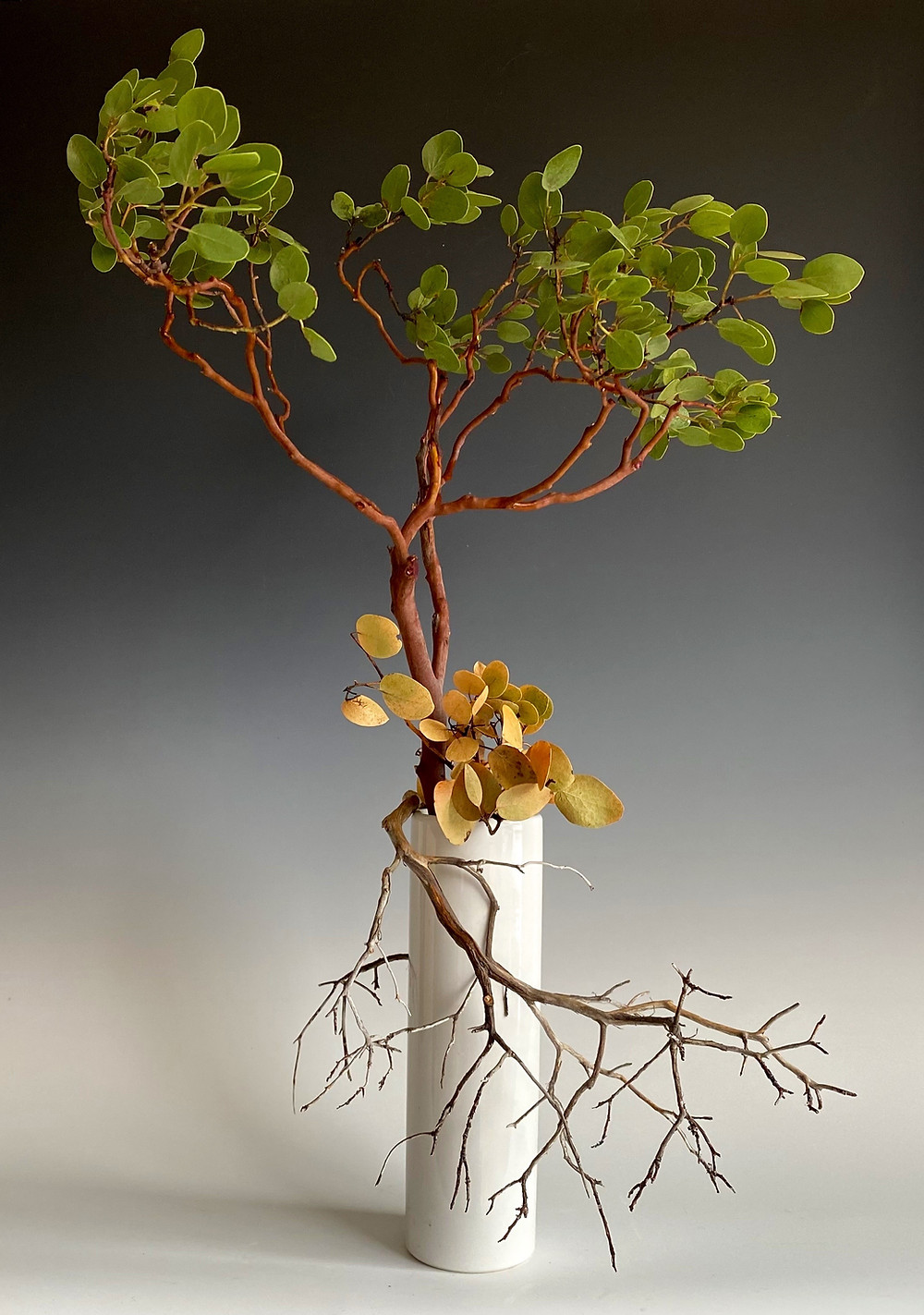 Japanese ikebana floral arrangement with Manzanita.