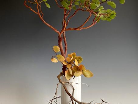 Chaos to Stillness: an Ikebana Exercise