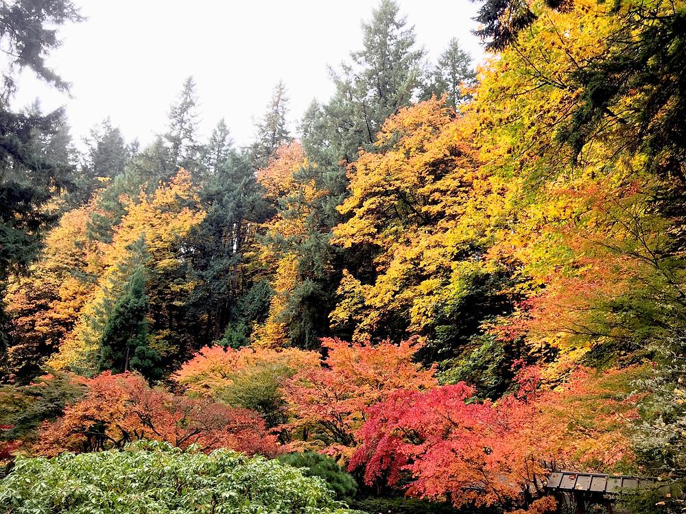 Autumn at the Portland Japanese Garden