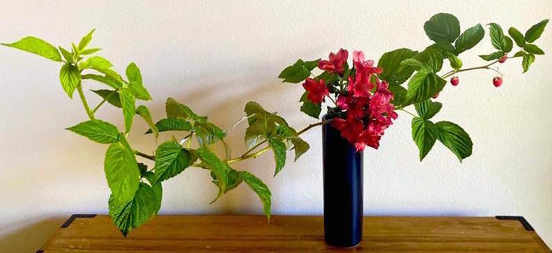 Ikebana flower arrangement with alstroemeria and raspberry.