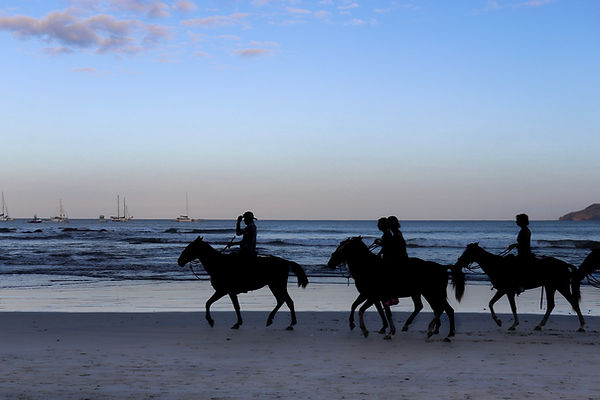 Horses at Dawn.jpeg