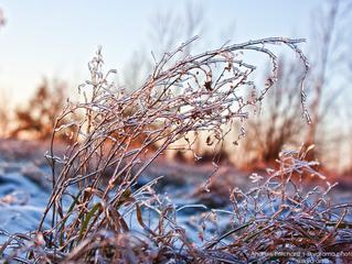December 18th | Icy Prairie