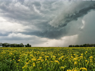 May 15 2015 | Outflow and wildflowers
