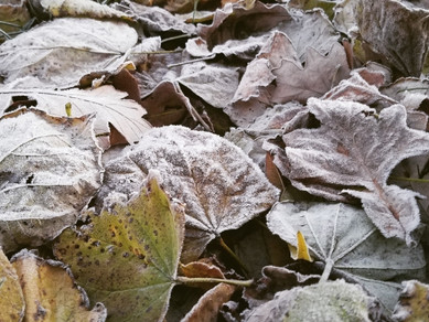 C-U Monthly Weather Review: November
