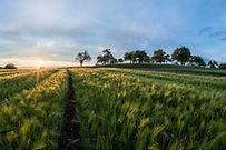 Відокремлена фермерська садиба