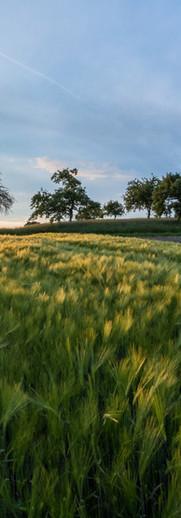 Agri / rural