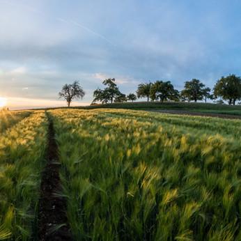 Foncier & entreprises agricoles
