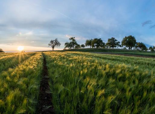 A true field of dreams: one farmer's story