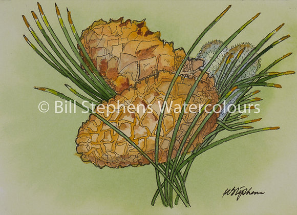Original Watercolour Painting - Pine Cones
