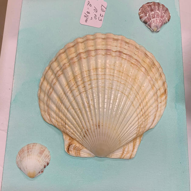 Shell Art - Wall Hanging on Canvas -  (8x10)