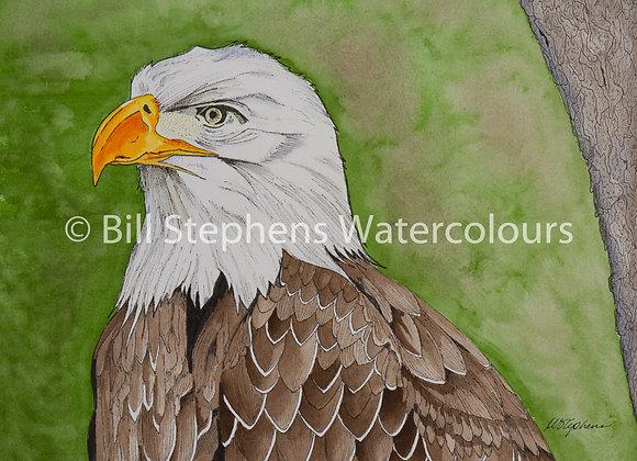 Original Watercolour Painting - Eagle