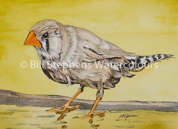Original Watercolour - Zebra Finch
