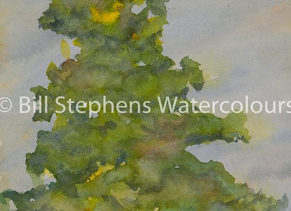 Original Watercolour Painting - Evergreen
