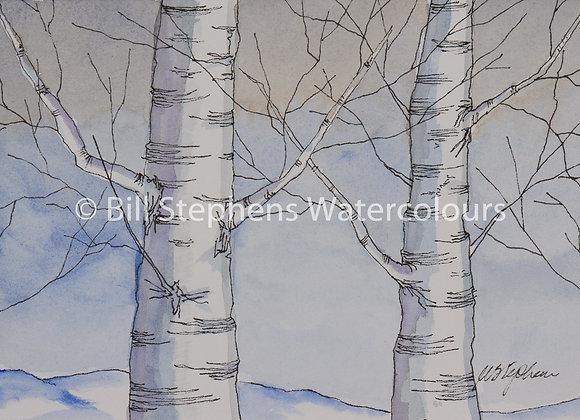 Original Watercolour Painting - Birch Trees