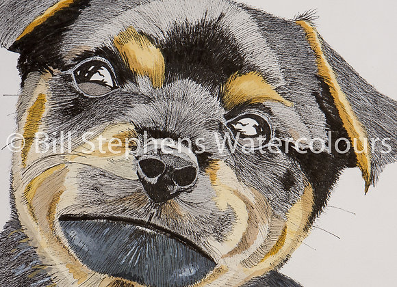 Original Watercolour Painting - Rottweiler Puppy