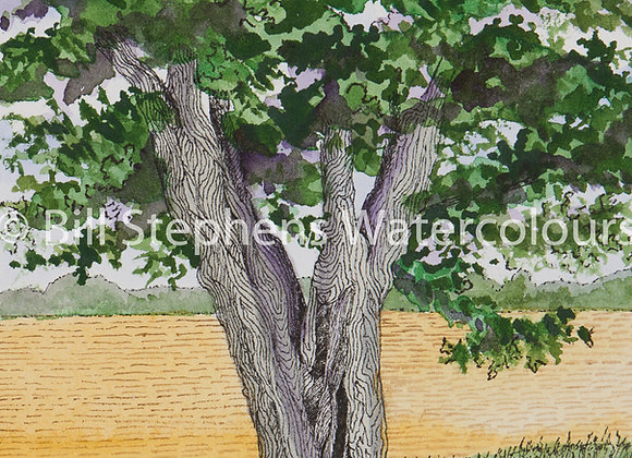 Original Watercolour Painting -Tree by plowed field