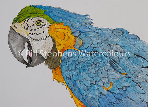 Original Watercolour - Colourful parrot