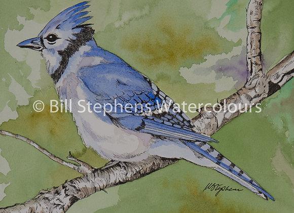 Original Watercolour - Blue Jay