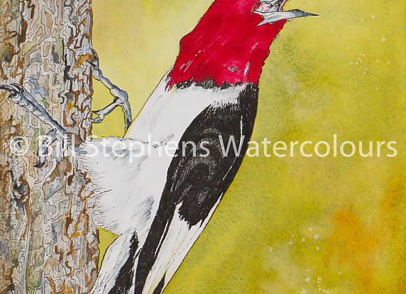 Original Watercolour Painting - Red Headed Woodpecker