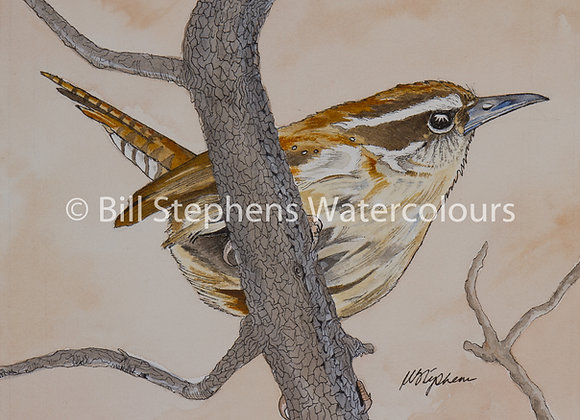 Original Watercolour - Carolina Wren
