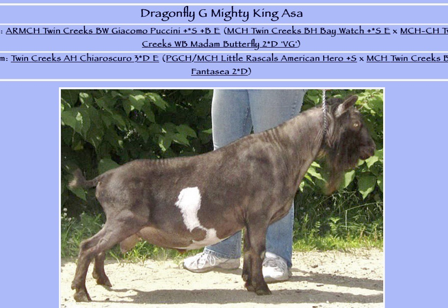 Mighty King Asa