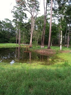 The Duck/fishing pond