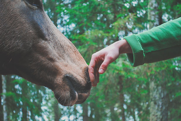 person hand touching horse_edited.jpg