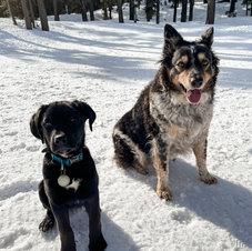 McCoy & Lucky