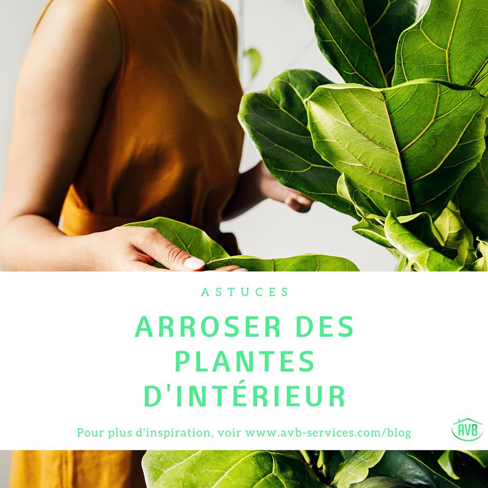 Arrosage des plantes d'intérieur #plantes #plantesdinterieur #arroser #avb #paris