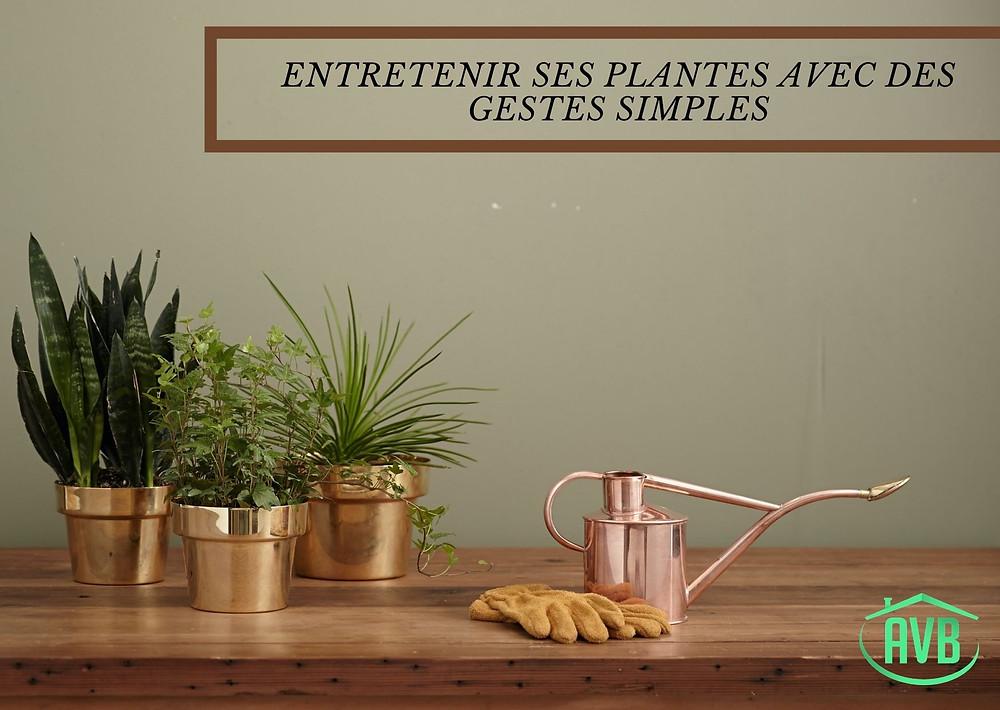 plante, jardinage, maison, pot, arrosoir, gant, outils