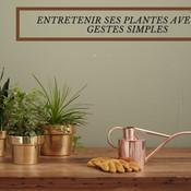 Entretenir ses plantes avec des gestes simples