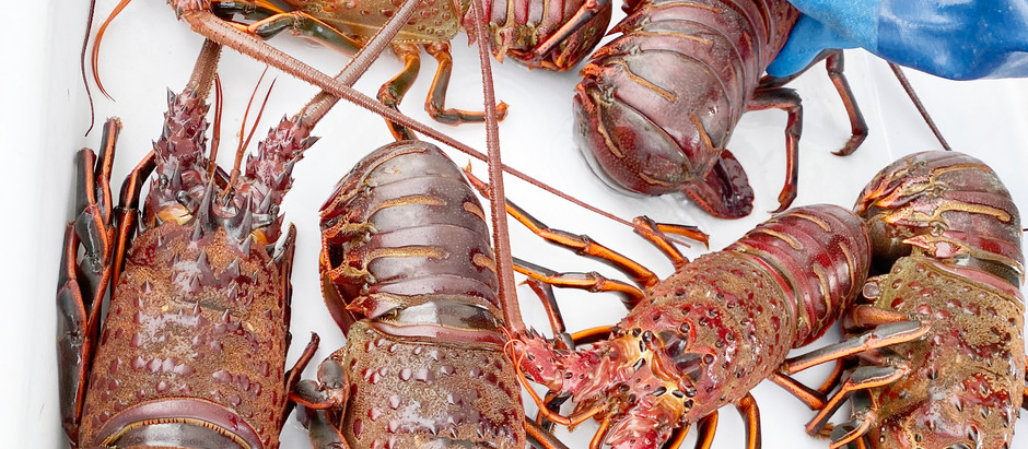 Lobster in Santa Barbara and Happy New Year from Rachael Bissig and The Team!