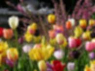 spring flowers 01.jpg