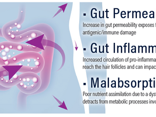 Exploring the Connection Between Gut Health and Hair