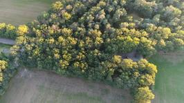 Natuurbos bovenaanzicht