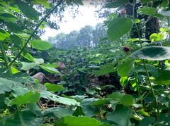 Natuurbos planten