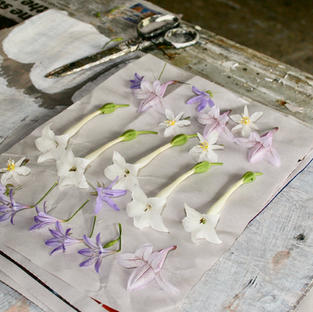 preparing flowers for the press