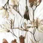 dried & pressed botanicals