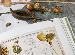 botanical imagery
