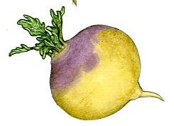 the_turnip_turnip_art_72.jpg