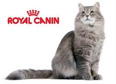 royal logo gatos.png