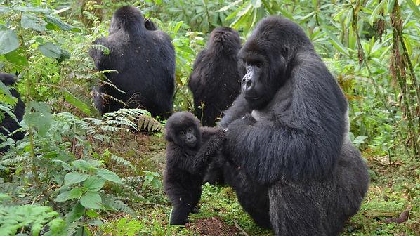 helping hand gorilla.jpg