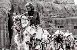 Renta de camellos