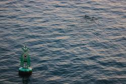 Ellos huyen de los barcos