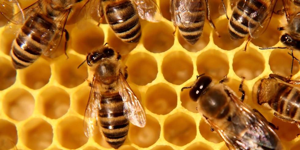 Stage petits apiculteurs •  + de 5 ans !