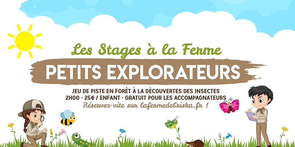 """Stage """"Petits explorateurs"""" • 6-12 ans !"""