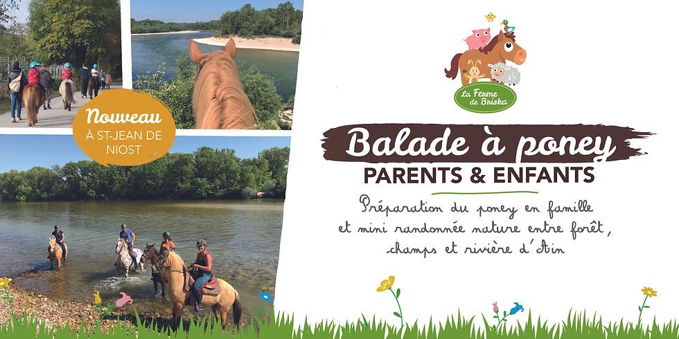 Balade à poney parents & enfants !