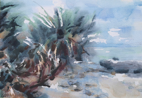 2016_01_24_tree reaches out to ocean_17x